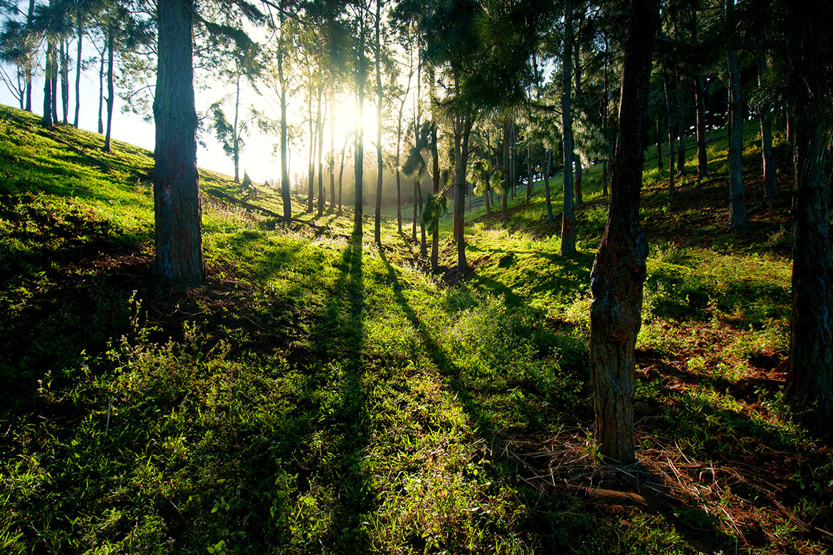 Guide to Mauritius forests