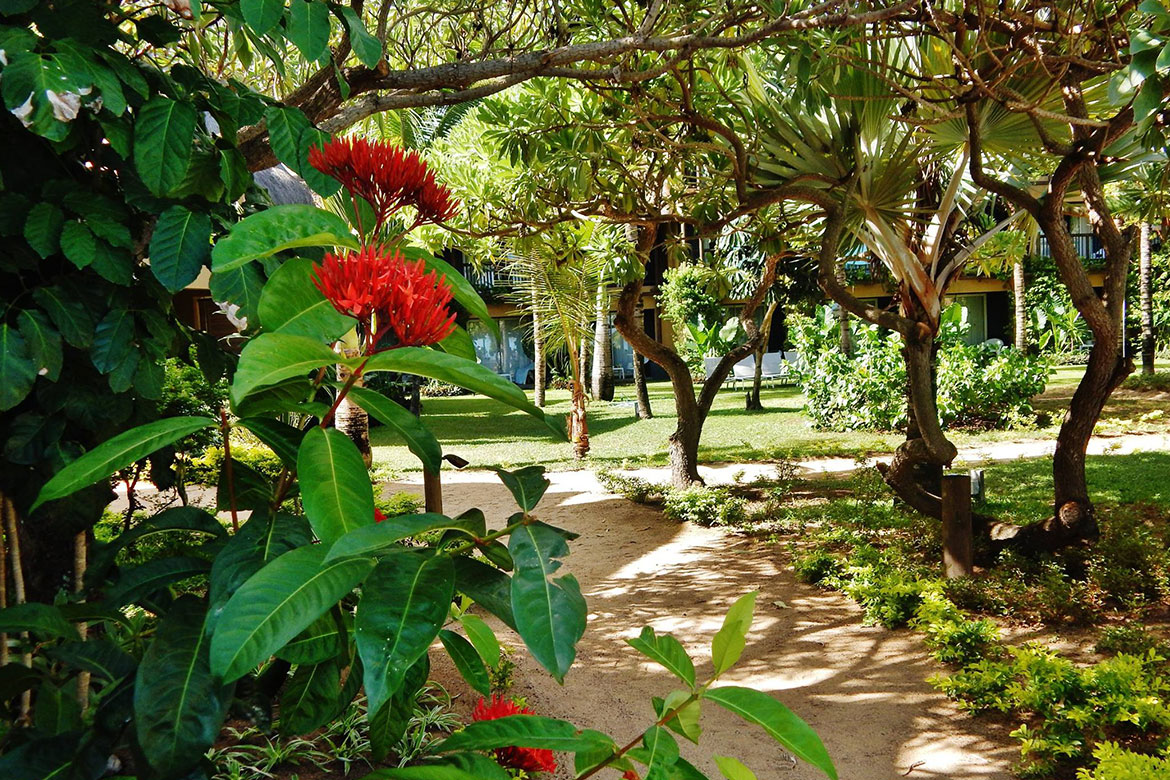 Endemic and medicinal plants in the gardens at Veranda Pointe Aux Biches